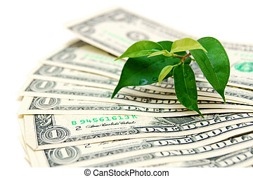 Money and plant. On a white background.