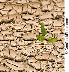 árbol joven, Crecer, Árido, tierra