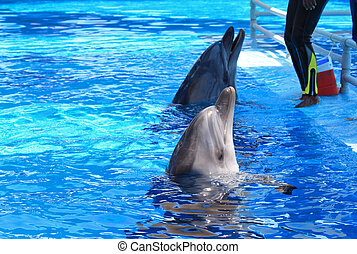 dolphins - the dolphins are hungry