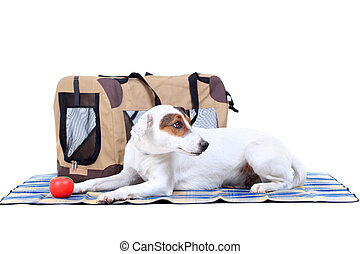 Jack Russel Terrier with a carrying bag against white...