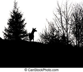 red deer stag silhouette - red deer stag without trophy in...