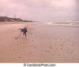 Sea waves broken umbrella