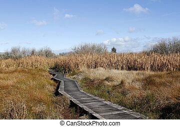 Boardwalk in wetland - Winding boardwalk leading into...