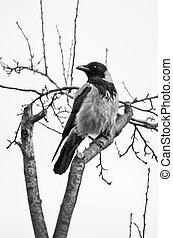 Big bird on the branch
