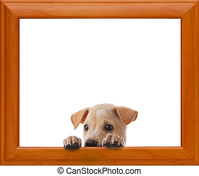 dog with frame