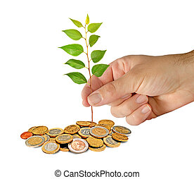 plantar, sapling, moedas