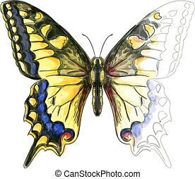 Butterfly Papillo Machaon. Unfinished Watercolor paint imitation. Vector illustration.