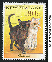 Domestic Cat - NEW ZEALAND - CIRCA 1998: stamp printed by...