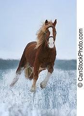 horse gallop on snow