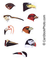 Birds heads collection - Hand painted watercolor collection...