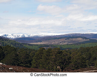 South Cairngorms seen from Balmoral forest, Scotland in may.