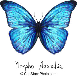 Butterfly Morpho Anaxibia. Watercolor imitation. Vector...