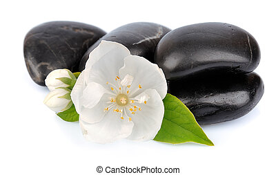 jasmine flower with a stone on a white background