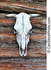 White Cow Skull