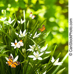 White flowers and the green grass, flying butterfly