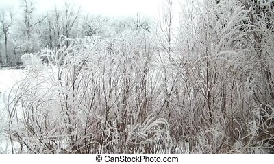 Scenic Frost on Trees Near River - Winter video of frozen...