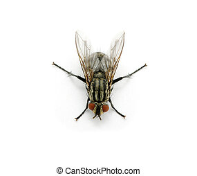 fly on a white - A macro shot of  fly on a white background