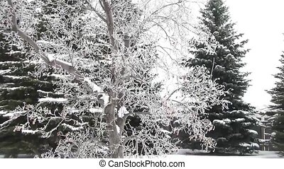 Flocked White Tree Moving in Wind