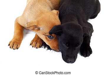 picture from above of two stray puppy dogs, one sleeping and...