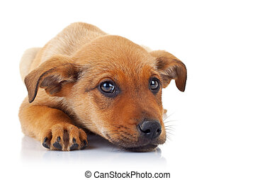 cute stray puppy dog with its head on its paws looking at...