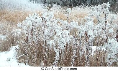 White Weeds Dancing in Winter - Burdock weeds naturally...