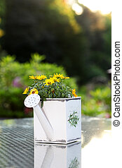 Yellow flowers in watering can - Yellow flowers growing in a...