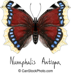 Butterfly Numphalis Antiopa. Watercolor imitation.