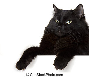 Black cat on a white background - Image of a black cat on a...
