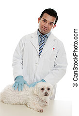 Vet with sick pet - A vet stands with a sick animal brought...