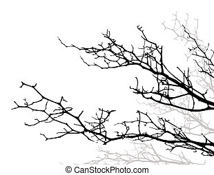 beauty silhouette tree background