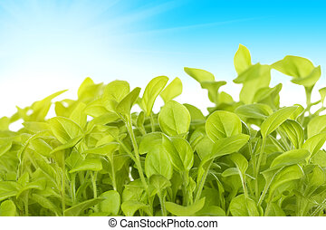 Germ of green plants on the background of the sk - Image of...
