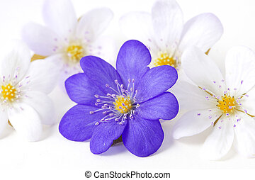 Abstract of the violet flower - Image of an abstract of the...