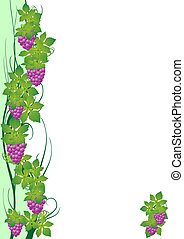 Grape vine - The vine and grapes The illustration on a white...