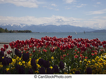 bodensee with tulips