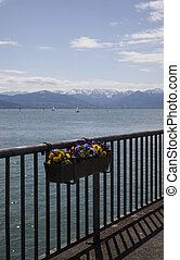bodensee with flowers
