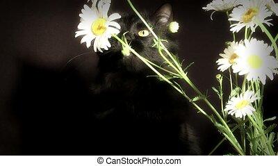black Cat,
