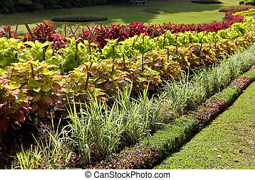 Colorful display of Coleus in a curved flower border