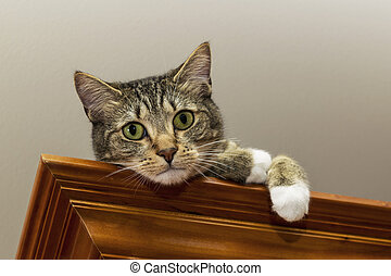 Tabby Cat on Wooden Shelf Watching Downward - Grey tabby cat...