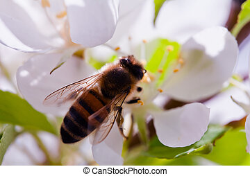 Bumble Bee Up Close - a macro shot of a bumble bee on an...