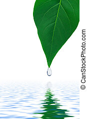 Leaf and water drop isolated on white background