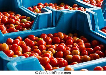 kers, Tomaten