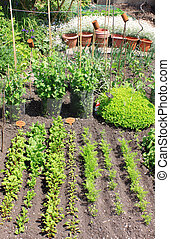 Vegi Plot - A small city vegetable garden/plot with a...