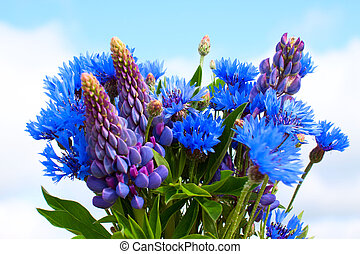 Cornflower and lupines bouquet on sky background