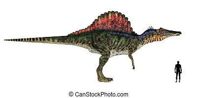 Spinosaurus Size Comparison - Illustration of a comparison...