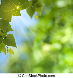 Abstract summer backgrounds with sun beam and leaf
