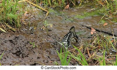 drinking water of swallowtail butte - I took the state that...