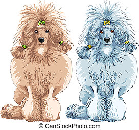 vector dog Poodle breed sitting - vector color sketch of the...