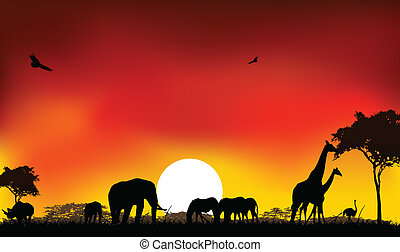 silhouette of animals wildlife - beauty silhouette of...
