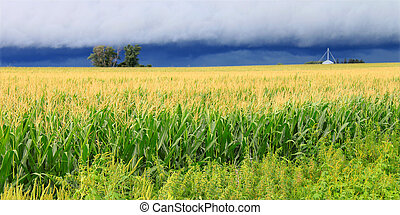 Thunderstorm Over Illinois Cornfield - Ominous clouds...