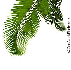 folhas, palma, branca, fundo